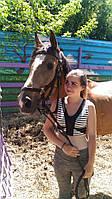 Конь Лайм (Лирой)