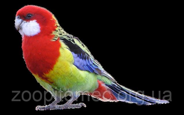 Яркий попугай фото