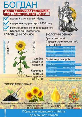 Семена подсолнечника Богдан, фото 2