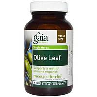 Gaia Herbs, Лист оливы, 120 жидких фито-капсул на растительной основе, GAI-14581