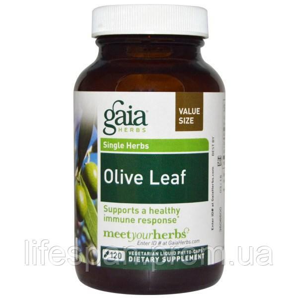 Gaia Herbs, Лист оливы, 120 жидких фито-капсул на растительной основе, GAI-14581 - lifespan в Киеве