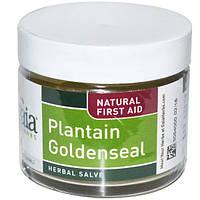 Gaia Herbs, Подорожник гидратис Травяная мазь 2 жидких унции (60 мл) (Discontinued Item), GAI-35420