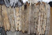 Мех на капюшон из енота 60 см