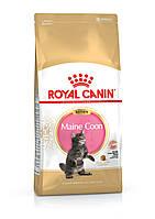 Корм для котов Royal Canin maine coon kitten 4 кг, Роял канин для котят мейн кунов