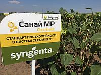 Семена подсолнечника Санай МР Сингента (под Евролайтинг) 2016, 2017 высокоурожайный лидер засухоустойчивости