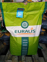 Семена подсолнечника Белла Экстра Евралис 2016 один из лидеров  по урожайности и засухоустойчивости