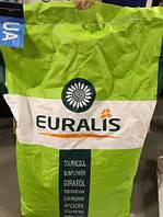 Семена подсолнечника Петуния Евралис 2016 Проверенный высокоурожайный гибрид