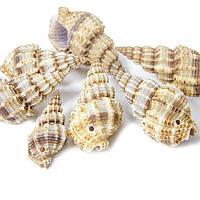 Бусины Морские ракушки 14-40*10-20*15мм бежевый