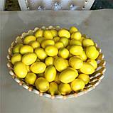 Лимон мелкий 2 см., фото 2