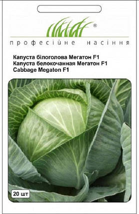 Семена капусты Мегатон F1 20 шт, Bejo Zaden, фото 2
