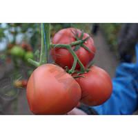 Seminis Мей Шуай F1 (МейШуай F1) семена томата индет. розового Seminis, оригинальная упаковка (500 семян)