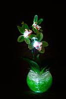 """Зеленая орхидея """"Единственная"""""""