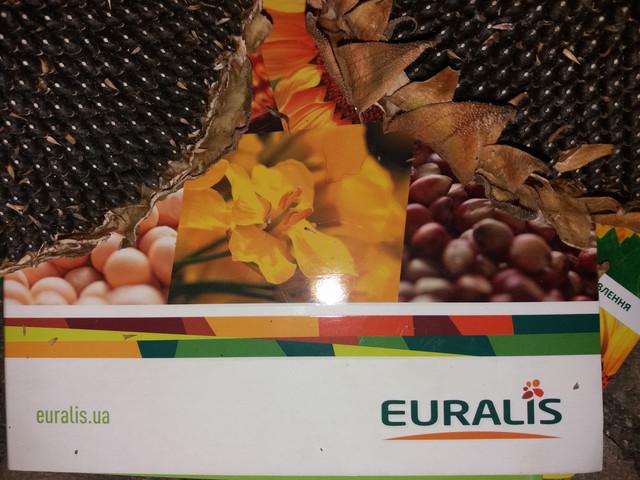 Гибриды подсолнечника три в одном ЕС НИАГАРА, ЕС БЕЛЛА, ЕС САВАНА, ЕС АНДРОМЕДА, ЕС ПЕТУНИЯ - засухоустойчивы, высокоурожайны, от семи рас заразихи