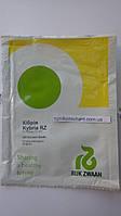 Семена огурца Кибрия (Kybria RZ) F1, 250 шт— партенокарпический корнишон