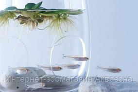 Главные правила по уходу за аквариумом
