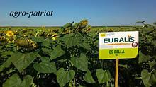Семена подсолнуха ЕС Белла Евралис