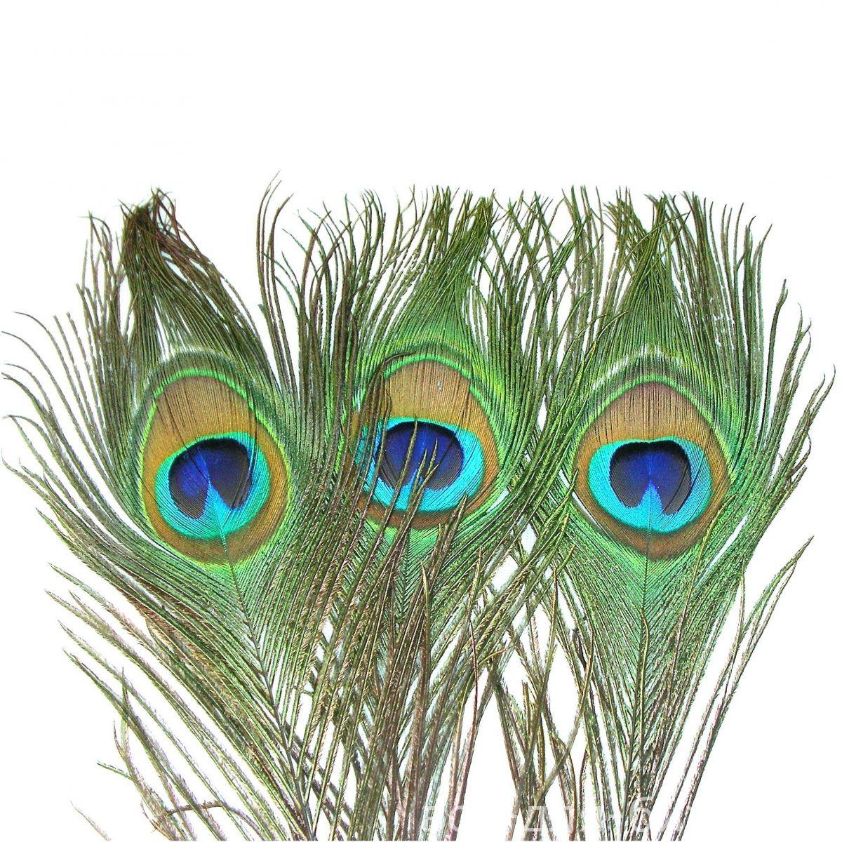 Как сделаны перья павлина 72