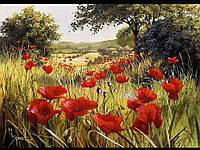 """Картина по номерам """"Маковая поляна"""" [40х50см, С Коробкой]"""