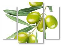 Модульная картина оливки