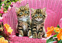 "Пазлы 1000 эл. Castorland ""Kittens on garden chair"""