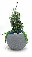 Вазон с растениями стабилизированными
