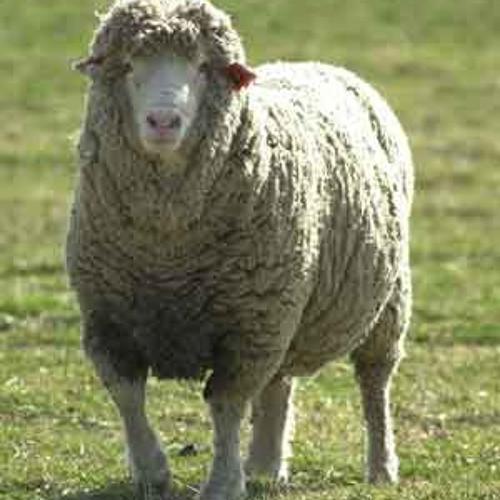 Товари для овець