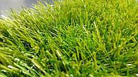 Штучна трава  Menorca Verde