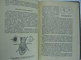 Сойфер В. Арифметика наследственности (б/у)., фото 7