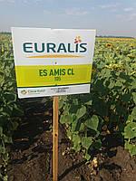 Семена подсолнечника ЕС АМИС под Евролайтинг, А-Е,105 дней, Евралис Семанс