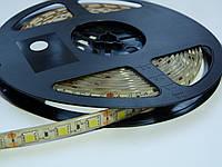 Светодиодная лента ПремиумRGB SMD 5050 60 диодов на метр IP65 герметичная (в силиконе)