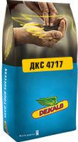 Насіння кукурудзи - ДКС 4717 (Мonsanto)