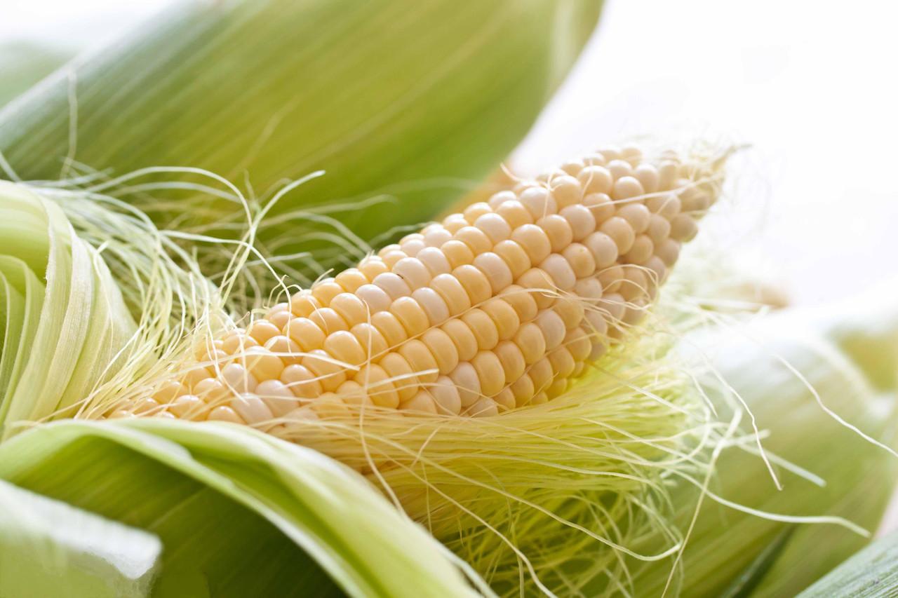 Семена кукурузы - ДКС-3507 (Мonsanto)