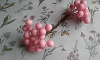 Калина глянцева (лакова) - світло розова