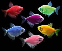 Тернеция GloFish ассорти