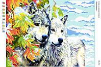 Волки зимой. СВ-3021 (А3)