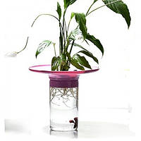 KW Zone Aquaponic Kit GA002 аквариум для петушка и растений голубой, 1.2л