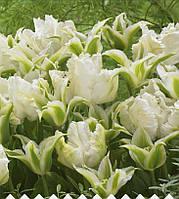 Арт-набор Белый Нефрит (7 луковиц тюльпанов)