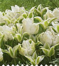 Арт-набір Білий Нефрит (тюльпани попугайні і вірідіфлора) 7 цибулин