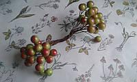 Калина глянцева (лакова) - оливкова з червоним