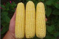Кукурудза цукрова Леженд F1  1кг. Clause
