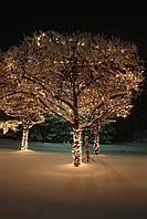 """Оформление деревьев led-гирляндами """"String"""" (""""Нить"""")"""