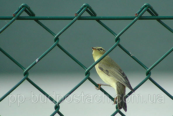 Забор из сетки рабицы: полезные рекомендации