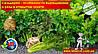 Сельдерей - особенности выращивания и уход в открытом грунте
