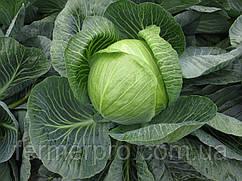 Семена капусты СВ 3390 JL \SV 3389 JL 2500 семян  Seminis