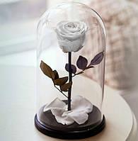 Долговечная роза в колбе Rose-Belle
