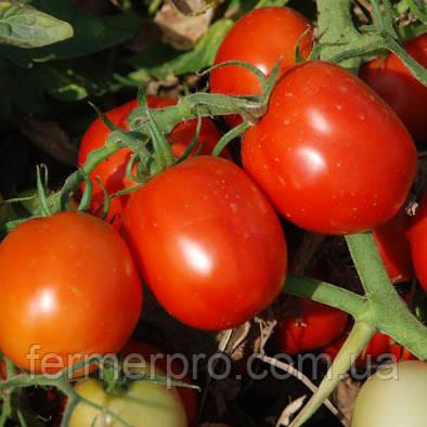 Семена томата Аксель F1 25000 семян Esasem