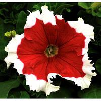 Семена Петуния крупноцветковая Фрост F1 Красная  1000 семян Syngenta
