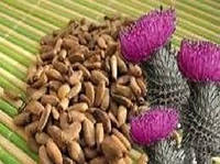 Расторопша семена .1 кг.(розторопша - укр.)