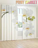 Фото шторы большая белая орхидея