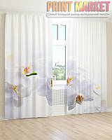 Фото шторы белая орхидея на белом фоне